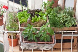 Hochbeete am Balkon mit Kräutern und Salat